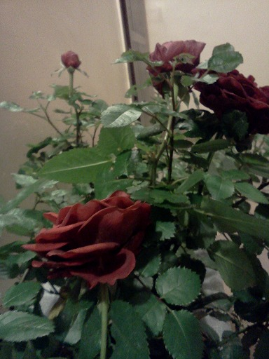 http://content0-foto.inbox.lv/albums/m/magnoliya/23-10-2013/IMG318.png