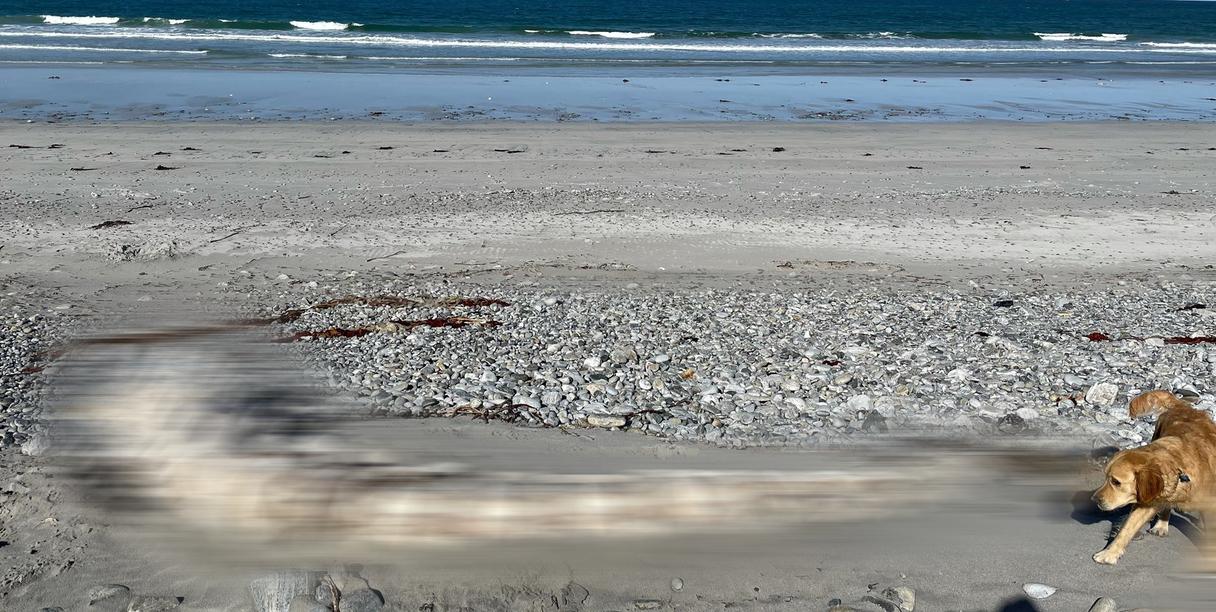Foto (5): Skotijas salā atrasto 11 metrus garo skeletu daudzi uzskata par Lohnesa ezera briesmoni