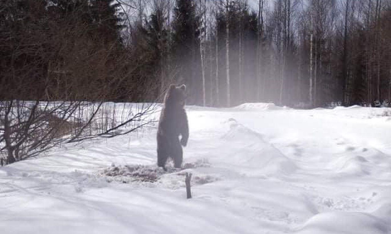 Foto: Igaunijā pie mežu mājiņas iemūžināts no ziemas miega pamodies lācis