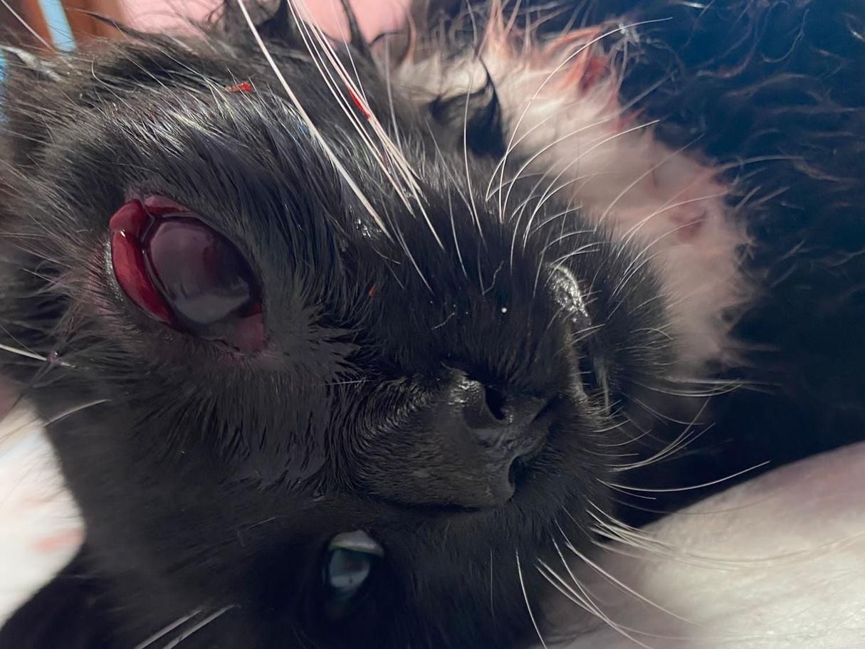 Liepājā ar «gaiseni» sašauti kaķi; aktiera Ērika Vilsona mīlulim lode izņemta no acs