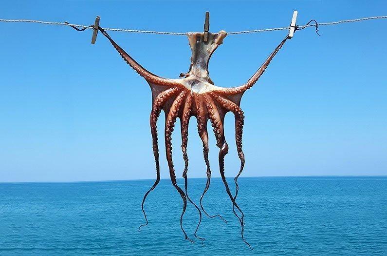 Atklāts pētījums: astoņkāji jūt ne vien fiziskas, bet arī emocionālas sāpes