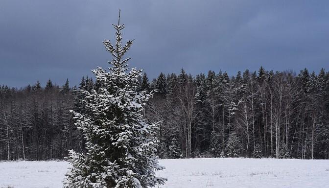 Prognozes liecina, ka Ziemassvētki būs balti