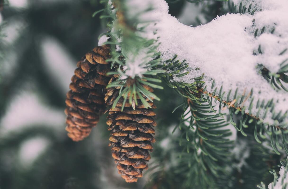 26.12.2020: Gulbenē un Alūksnē sasnidzis 14 centimetru bieza sniega sega