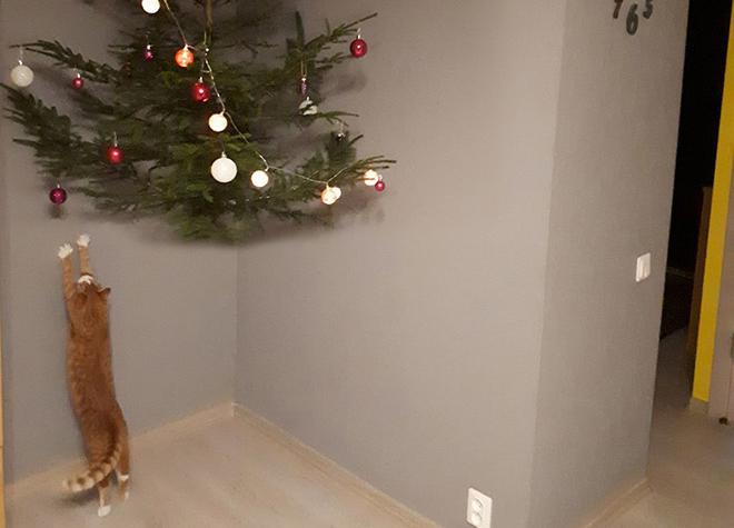 Foto: Kā pasargāt Ziemassvētku eglīti no sava mājas mīluļa