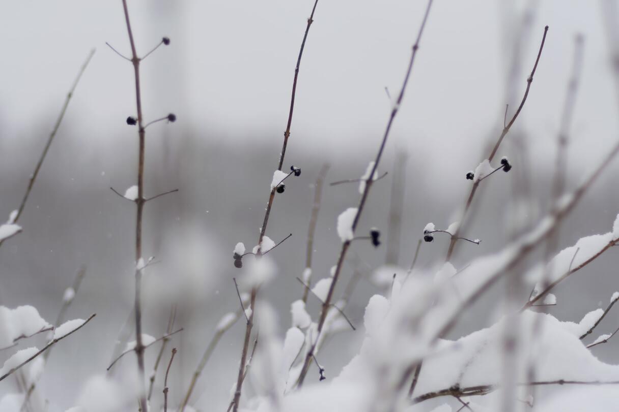 Šodien (09.02.2021) daudzviet Latvijā gaidāms sniegs un putenis