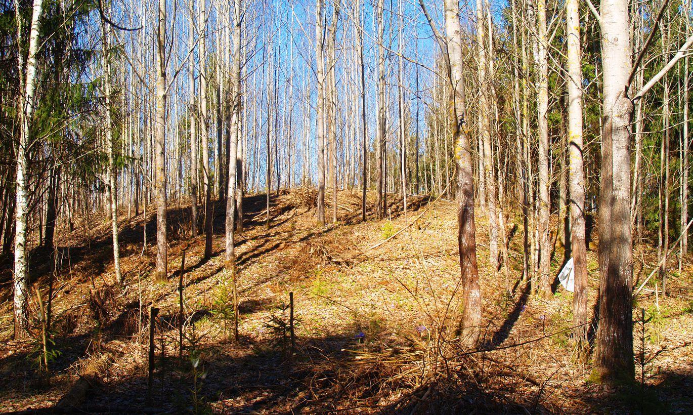 Tiek apzināti un pētīti jauni pilskalni Latvijā