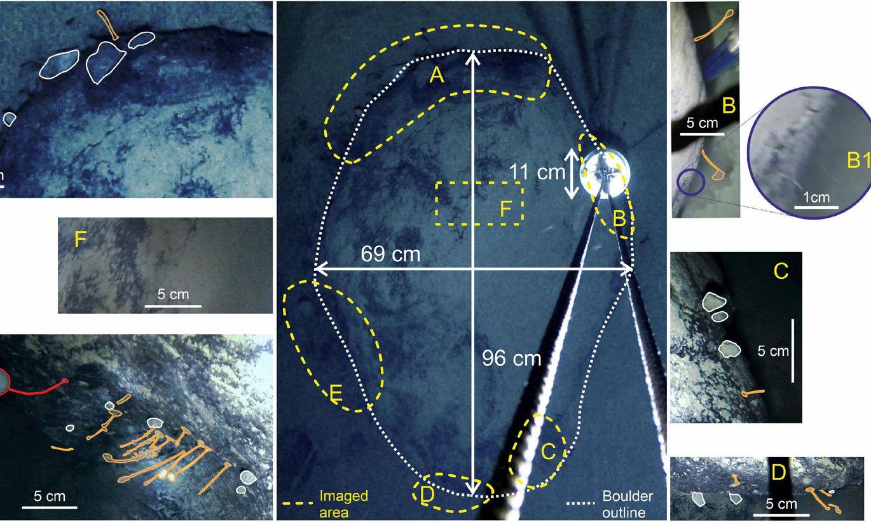 Zem Antarktīdas ledāja atrasti nezināmi radījumi