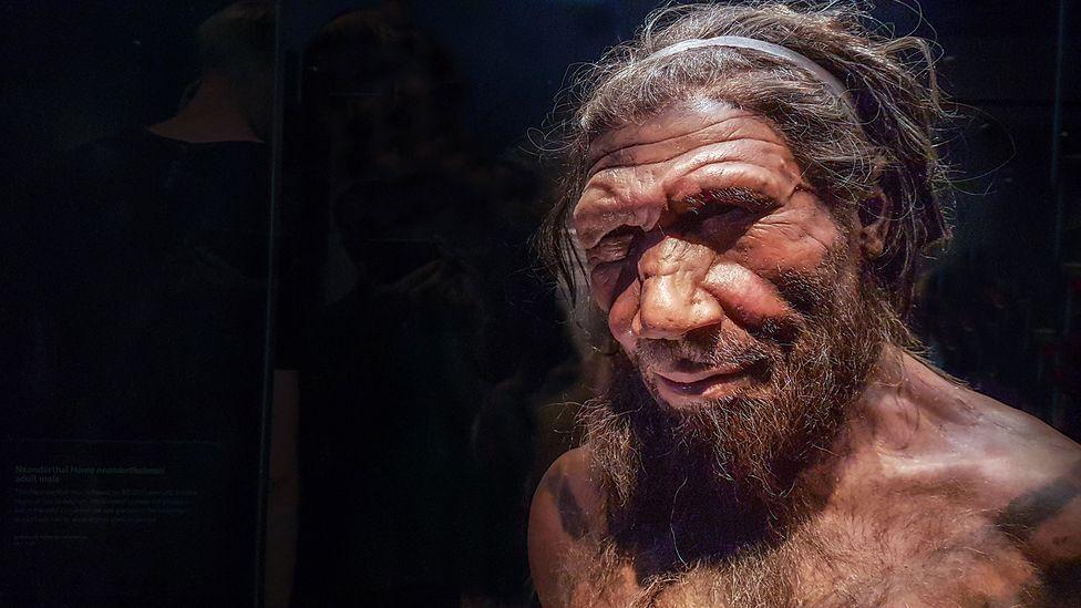 Zinātnieki laboratorijā izaudzējuši neandertālieša smadzeņu hibrīdu